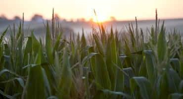 Wisconsin Farmers See Favorable Planting Conditions, Prices This Spring