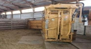 Adding Calf Value Begins at the Working Chute