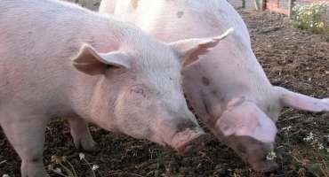 Farm Bill Passing NC Senate Includes New Biogas Permits