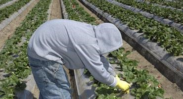 Migrant workers and permanent residency