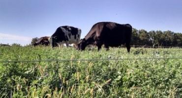 Dairy Sense: Impact of Changing Pasture Quality
