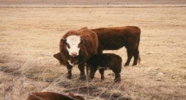 Grass Tetany: A Disease of Many Challenges