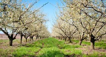 Ontario apple grower update