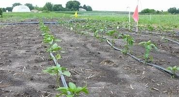 On-Farm Readiness Reviews Offered to Fruit and Vegetable Growers