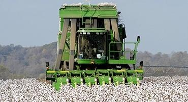 Low Prices Lead To Cotton Acreage Drop In 2020