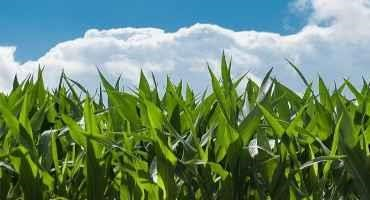 Early June 2021 Crop Condition Report Paints an Overly Rosy Picture