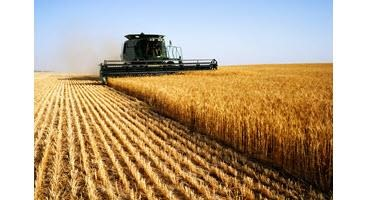 U.S. winter wheat harvest begins