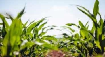 Corn, Soybean Crops Ahead of Schedule as U.S. Wheat Harvest Lags Behind Average