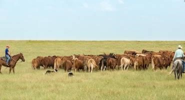 NCBA Delivers Progress on Backend 150 Air-Mile Exemption for Livestock Haulers