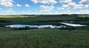 Why Grassland Management?