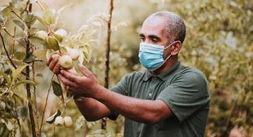 Cdn. gov't halves funds to quarantine farm workers