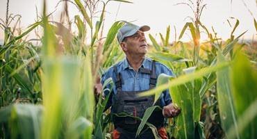 New art exhibit celebrates agriculture