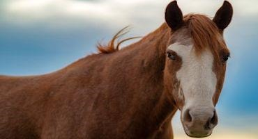Horses need up-to-date West Nile Virus Vaccinations