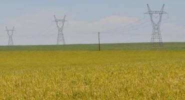Do You Need to Control Volunteer Wheat to Protect the Next Season's Winter Wheat Crop?