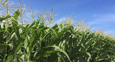 Farmers provide crop update