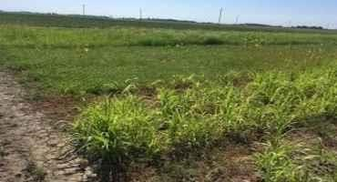 Forage Fertility: Where We Are and Why it Matters