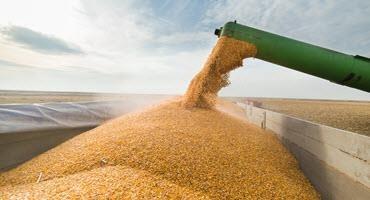 U.S. urges Mexico for GMO acceptance