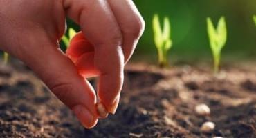 Nufarm Introduces Precinct Seed Treatment