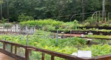 Urban Agriculture Gets Funding Boost From UARP