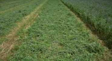 Steps to Speed up Field Curing of Hay Crops
