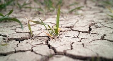 NW Ont. farmers facing severe drought