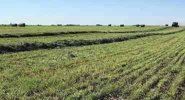 Should you Apply Sulfur Fertilizer for Alfalfa?