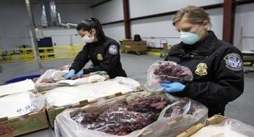 CBP ag specialists intercept rare pest