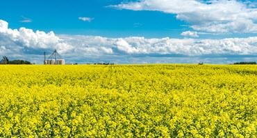 Bayer introducing new packaging for DEKALB canola