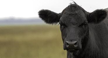 More support for Ont. livestock farmers