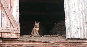 Finding barn homes for cats