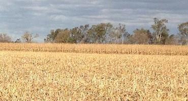 Crop Residue Exchange Links Growers and Grazers