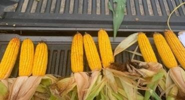 2021 Crop Conditions Tour Shows Promising Outlook