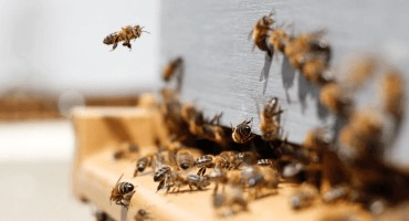 The bee's knees of precision agriculture