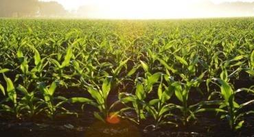 USDA Releases 2021 Farmland Cash Rent Values