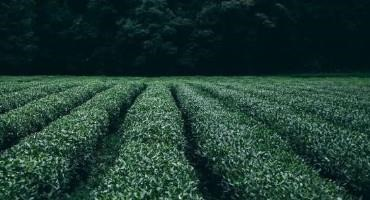 Diverse Landcover Boosts Yields for Major U.S. Crops, Study Finds