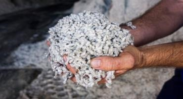 Cotton Byproduct Beef Feeding Recommendations – Have They Changed?