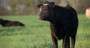 Testing of Hay and Pastures Key to Offsetting High Feed Grain Prices