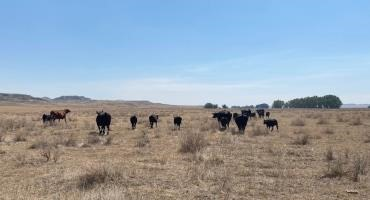 Assessing Western Drought Conditions – Grasshoppers, Fires and Reduced Yields Threaten Montana Farmers' and Ranchers' Livelihoods