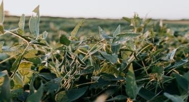 Chuck talks soybeans - when to plant and best varieties for greater yield