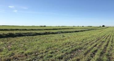 Fall Cutting Alfalfa in 2021