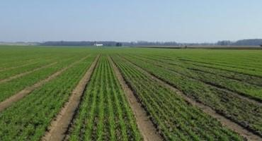 Planting the 2022 Wheat Crop