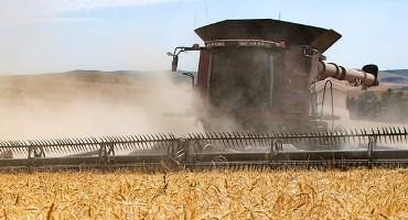 WSU Awarded $10 Million to Increase Nutrition in Food Crops