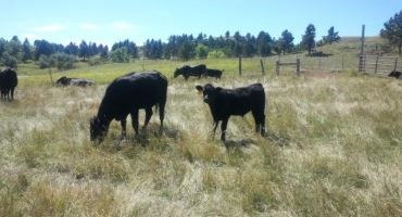 Intensively Managed Grazing Can Increase Profits, Improve Environment