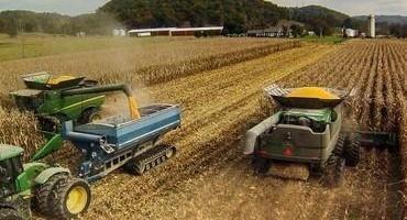 Consider Drying Remaining Corn Crop