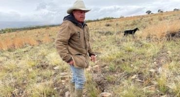 When Cows Move, They Help Fight Climate Change and Repair Soil. Virtual Fencing can Help Ranchers Guide Where they Graze