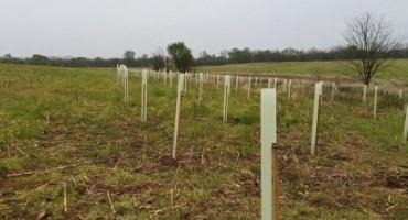 Riparian Buffers for Field Crops, Hay, and Pastures