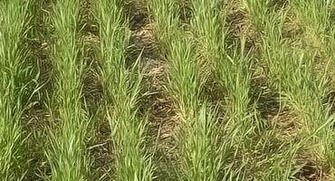 Planting an October cover crop