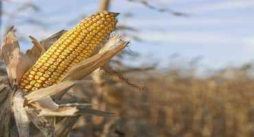 Weed Management Practices: Fall Scouting For Weeds