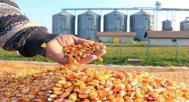 Seed Selection Can Help Manage Diseases Next Year