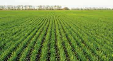 Survey finds cover crop usage strong on prairies